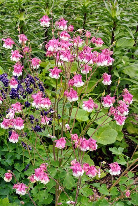 visiting my flower cutting garden the martha stewart blog