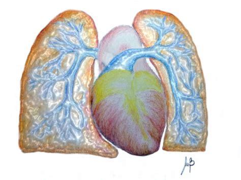 vasi polmonari ipertensione polmonare o ipertonia polmonare ncf