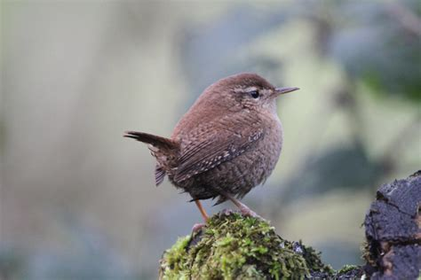 strong effects of climate change on common bird