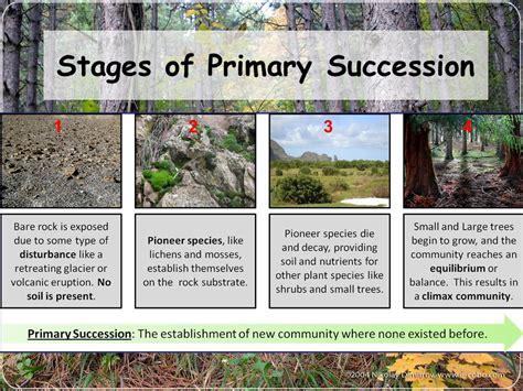 primary succession flowchart primary succession flowchart create a flowchart
