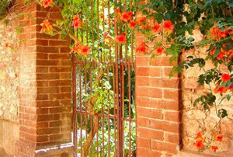 come curare un giardino curare il giardino come fare bricocenter