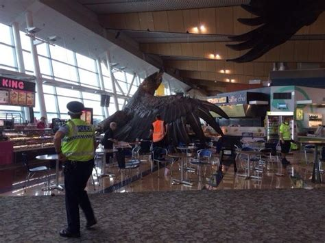 earthquake wellington giant eagle falls in new zealand airport after quake itv