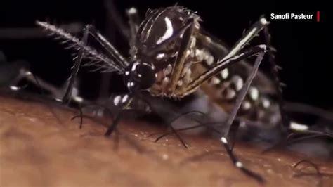 cruises zika free zika virus airlines and cruise ships are refunding