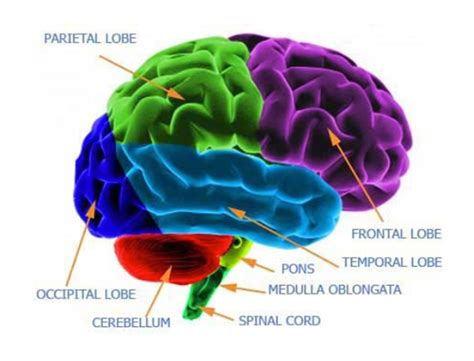 pattern analysis brain functions of a brain making headway center