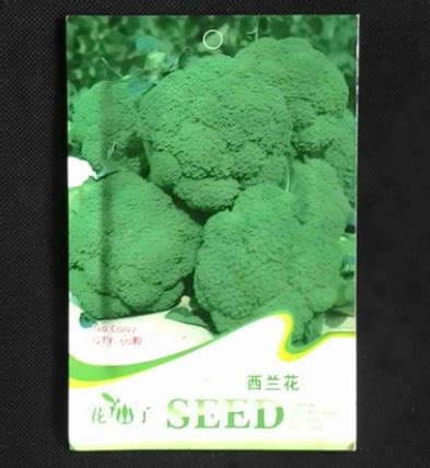 Benih Brokoli Green benih green broccoli 20 biji retail asia bibitbunga