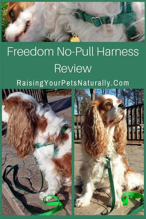 freedom no pull harness harness review freedom no pull harness raising your pets naturally with