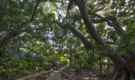 giardino botanico cagliari orto botanico sardegnaturismo sito ufficiale
