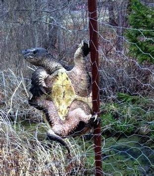 wildlife   backyard proceed  caution