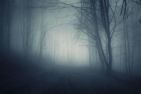 foggy s foggy forest at night www pixshark com images