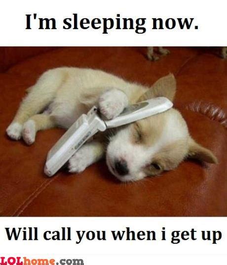 Dog On Phone Meme - sleepy dog funny pic