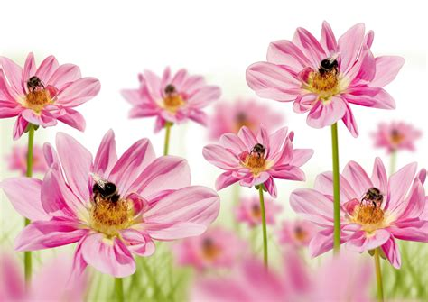 high resolution photo flowers 26908 flower wallpapers flowers