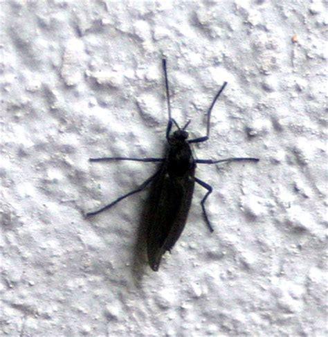 juckende stiche im bett juckende stiche fliegen artige tiere larven nest im