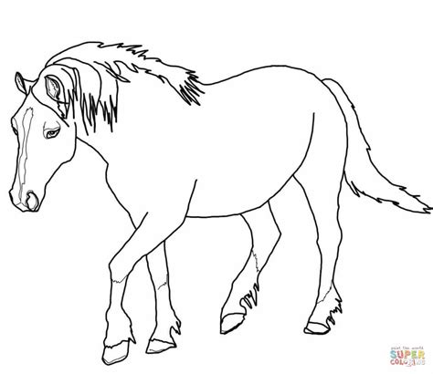 coloring pages of quarter horses quarter horse coloring pages palomino grig3 org