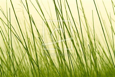 Gras An Die Wand Malen by Wellness Gras Halme Als Fensterfolie Dresdner Erh