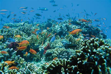 Volcanic Beach Cruise Fiji S Mamanuca Islands Blue Lagoon Cruises