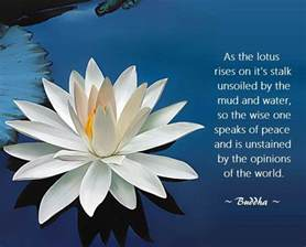 Lotus Flower Quote Buddha Lotus Buddha Quotes Quotesgram