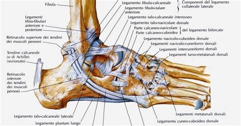 tavole anatomiche tavole anatomiche