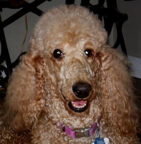 senior dogs for adoption dogs for adoption
