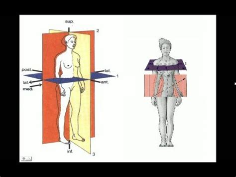 que es el eje espacial para un corte de cabello gratis ensayos anatomia espacial youtube