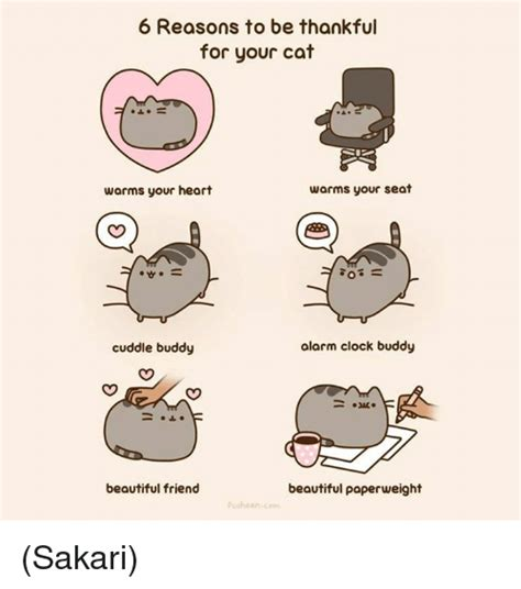Cuddle Buddy Meme - 6 reasons to be thankful for your cat warms your seat warms your heart alarm clock buddy cuddle