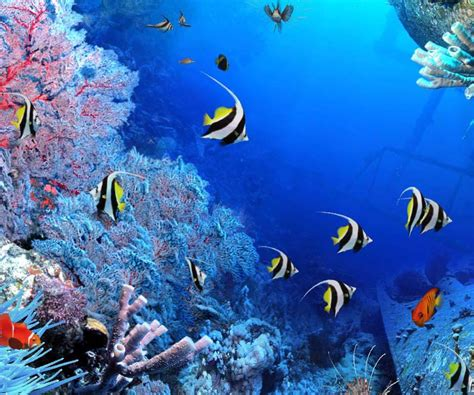 live wallpaper for pc no download aquarium live wallpaper android apps on google play