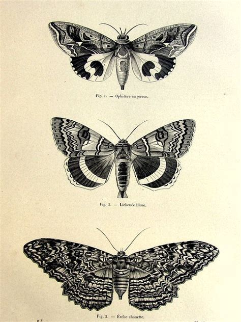 tattoo butterfly vintage 42 best sphynx tattoo images on pinterest death head