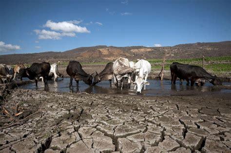 imagenes de animales impactantes adaptaci 243 n al cambio clim 225 tico 191 solo en papel la prensa