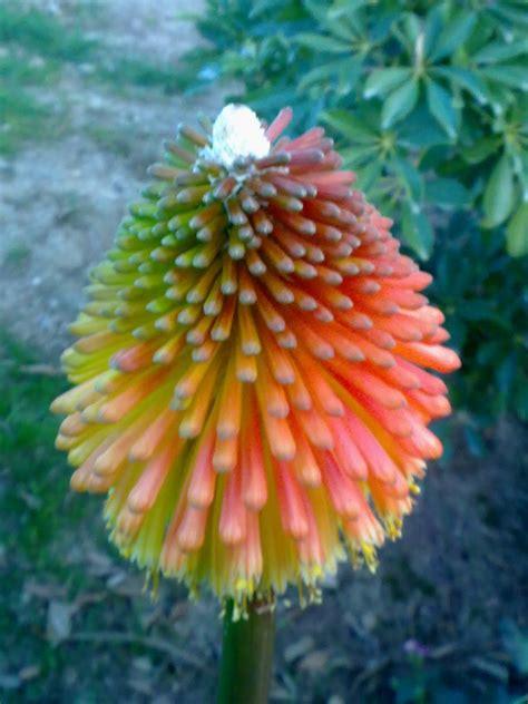 imagenes raras y bellas fotos de flores raras y bonitas