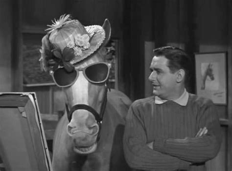 Mr Ed Meme - hello i m mr ed five famous movie television or