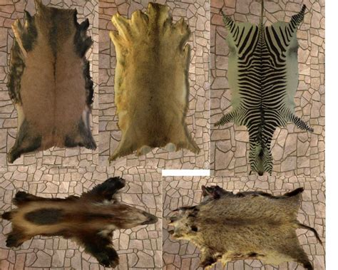 real animal rugs real fur rugs for sale rugs ideas