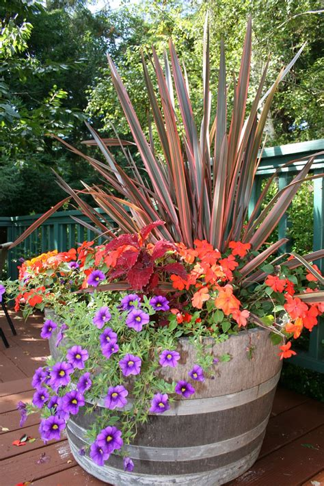 containers gardening container garden tips kinds of ornamental plants
