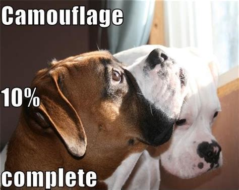 Boxer Dog Meme - 10 dangerously alarming facts about boxers