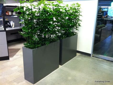 plant partition everything grows plants as office dividers