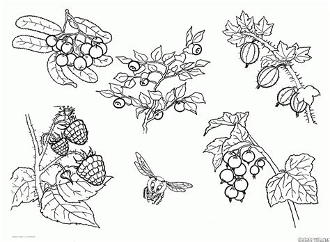 coloring page different berries