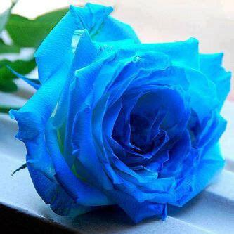 sebuah makna  bunga mawar izzaninmk