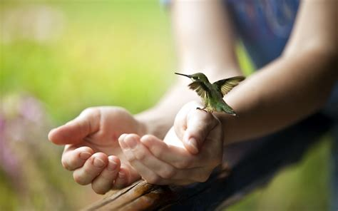wallpaper hummingbird hand bird hummingbird on hands
