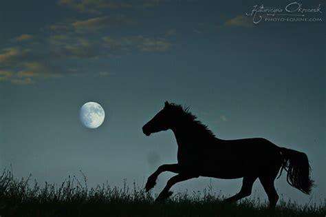 arme schlafen nachts ein 7 tolle ideen f 252 r traumhafte pferdeshootings herzenspferd