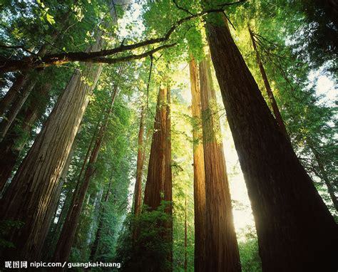 the wood for the trees one s view of nature books 阳光森林摄影图 自然风景 自然景观 摄影图库 昵图网nipic