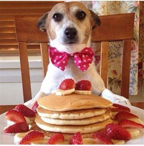 can dogs pancakes pettreater