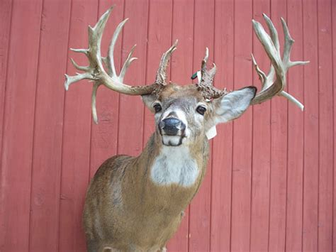 Illinois Records Illinois Record Non Typical S Owner Pleads Guilty To Poaching Charge Outdoorhub