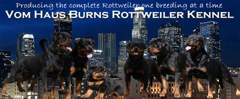 rottweiler breeders southern california rottweiler puppies for sale vom haus burns rottweiler kennel youth rottweilers