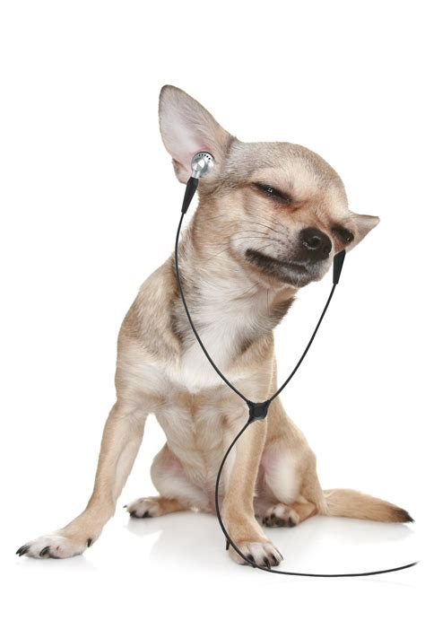 dogs soundtrack improving the affective state of rescue dogs sensitivity to reward change