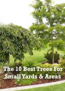 trees for small backyards 1000 images about landscaping for dummies on