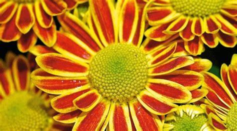 fiore canzone ci vuole un fiore bimbi sani e belli