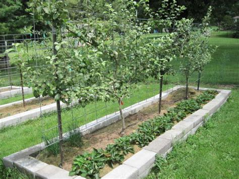 Part 2 How To Design Your Own Miniature Fruit Garden Fruit Tree Garden Layout
