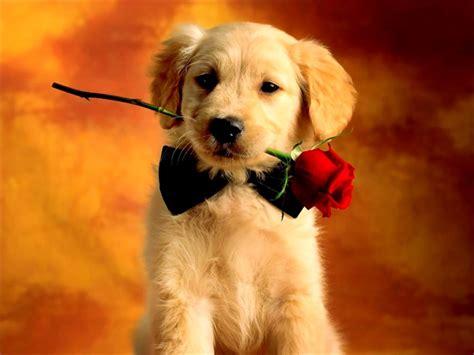 when should i neuter my puppy should i get my neutered housemydog