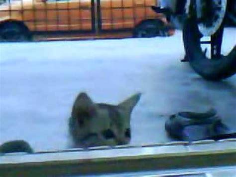 film upin ipin kaki patah kucing patah kaki youtube