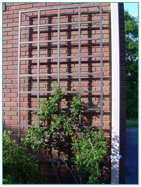 Ideas For Metal Garden Trellis Design Metal Garden Trellis Designs