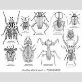 Aquatic Worm Drawing | 368 x 280 jpeg 23kB
