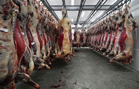 slaughter house support industrial slaughterhouses pacific standard